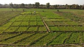 Зеленый взгляд сельского дома Стоковое фото RF