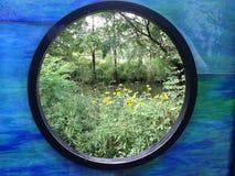 зеленый взгляд Стоковые Изображения