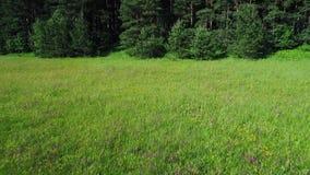 Зеленый вид с воздуха лугов сток-видео