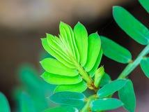 Зеленый всход - новая жизнь начинает концепцию Стоковое Изображение