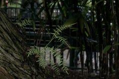 зеленый всход Стоковое Изображение