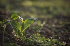 зеленый всход Стоковые Изображения