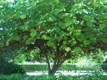 зеленый всход Стоковое фото RF