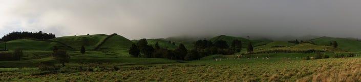 Зеленый выгон на горном склоне Стоковая Фотография RF