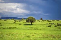 зеленый выгон Стоковая Фотография RF