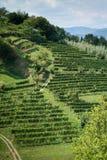 Зеленый горный склон в Бергаме Стоковое Изображение