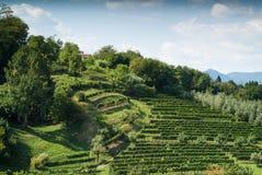 Зеленый горный склон в Бергаме Стоковые Фото