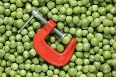 Зеленый горох в струбцине Стоковое Изображение RF