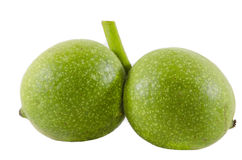 Зеленый грецкий орех изолированный на белой предпосылке Стоковая Фотография RF