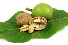 Зеленый грецкий орех и зрелый треснутый грецкий орех на зеленых лист изолированных на белизне Стоковые Фотографии RF