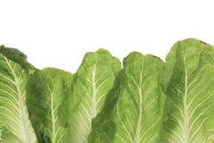 Зеленый густолиственный овощ листовой капусты изолированный на белизне Стоковые Изображения
