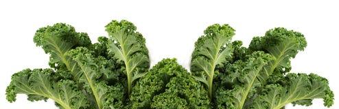 Зеленый густолиственный овощ листовой капусты Стоковая Фотография