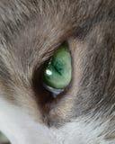 Зеленый глаз ` s кота Стоковые Фотографии RF