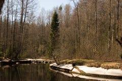 Зеленый лес весны в лучах солнца стоковая фотография rf