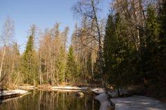 Зеленый лес весны в лучах солнца стоковое изображение