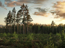 Зеленый лес весны в лучах солнца Стоковое фото RF