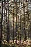 Зеленый лес весны в лучах солнца Стоковые Фотографии RF