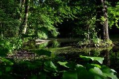 Зеленый лес весны в лучах солнца Стоковые Изображения