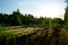 Зеленый лес в вечере Стоковые Фотографии RF