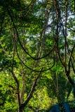 Зеленый лес джунглей Стоковые Изображения