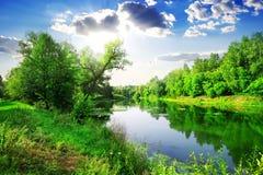 Зеленый лес на реке стоковая фотография
