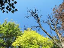 Зеленый лес на яркий солнечный день Стоковое фото RF