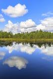 Зеленый лес сосны за прудом в болоте Стоковое Изображение RF