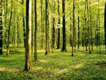 Зеленый лес Стоковая Фотография