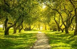 Зеленый лес Стоковое Изображение RF