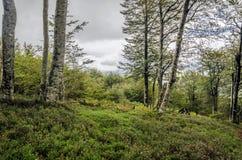 Зеленый лес Стоковые Фотографии RF