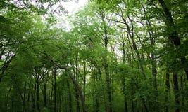Зеленый лес Стоковая Фотография RF