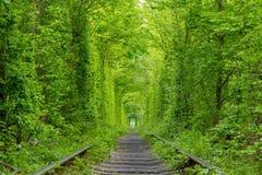 Зеленый железнодорожный тоннель Стоковая Фотография