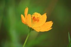 зеленый желтый цвет Стоковые Фото
