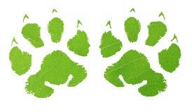 Зеленый животный след ноги Стоковое фото RF