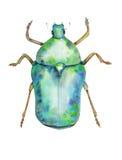 Зеленый жук-чефер на белой предпосылке Стоковое Изображение RF