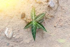 зеленый завод малый Стоковое фото RF
