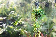 Зеленый завод Creeper Стоковое фото RF