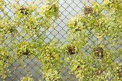 Зеленый завод Creeper Стоковое Изображение RF