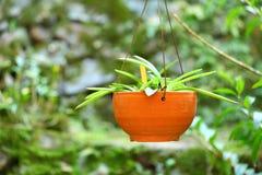зеленый завод potted Стоковая Фотография RF
