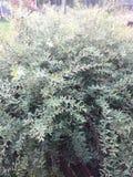 Зеленый завод shrup нажима backround Стоковые Фотографии RF
