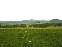 Зеленый зацветая луг с холмами на изолированном белом backgroun стоковое изображение rf