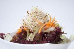 зеленый здоровый салат стоковая фотография