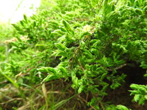 зеленый изверг Стоковое Изображение