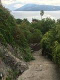 Зеленый изгороди путь вниз с видом на море Стоковое Фото