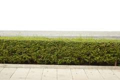 Зеленый изолированный куст Стоковое фото RF