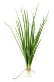 Зеленый изолированный лук Стоковое Изображение RF