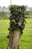 11 зеленый листь Стоковое фото RF