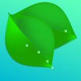 Зеленый лист с падениями Стоковая Фотография RF