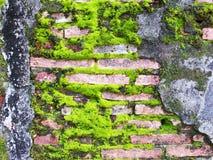 Зеленый лишайник мха стоковое изображение