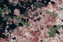 Зеленый лишайник на розовом камне гранита Стоковое Изображение RF